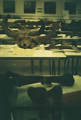 Horns (bloodyflameymary) Tags: elephant london analog paleontology mammoth rhino bison mammals naturalhistorymuseum fossils halina35x