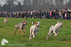 Boxing Day hunt (Vicktrr) Tags: horses horse jump jumping leicestershire hunting hunter cob loughborough huntsman hunters quorn prestwoldhall huntingpink huntmeet quornhunt