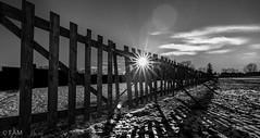 Snow fences in mud (Martin Zurek) Tags: morning winter bw sun snow sunrise fence landscape pov sonne zahn trolled
