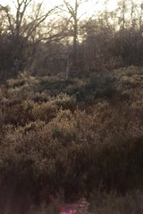 Plainlands (HennerzB) Tags: travel winter sunlight lake tree ice mushroom vertical forest lens landscape miniature moss woods stream branches fungi journey stump flare hennerz hennerzphotos