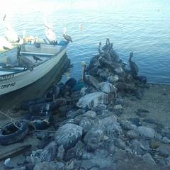 #Guaymas.... (MIGUEL CENTENO SILVA) Tags: sonora guaymas opus dei pri amorc cajeme rosacruz