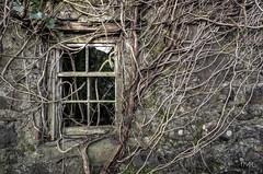 Cottage - 38 (Irishmanlost) Tags: abandoned topf25 topv111 topv2222 topf50 decay topv1111 cottage topv9999 topf150 topf100 2012 topv7777 coantrim topv10000 irishmanlost