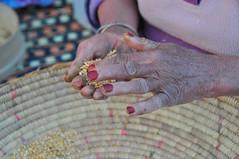 wheat (serena.borgia) Tags: life trip travel woman work live wheat femme marocco ouarzazate nokon