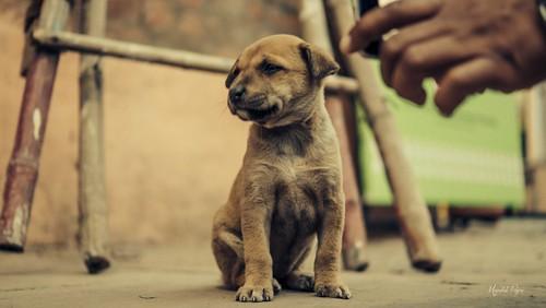 Poser Puppy