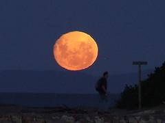 Moon Rising at dusk. (Pcorf) Tags: moon full moonrise tasmania rise past ulverstone