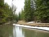 Fenland Trail (I) (Pepe (JmCP)) Tags: canada olympus alberta bow banff rockymountains fenland rocosas canadianrockies fenlandtrail canadá epm1