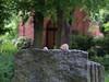 Zu Fuß durch Friedenau 11 (Sockenhummel) Tags: friedhof fuji fujifilm x20 kiez spaziergang friedenau stubenrauchstrasse künstlerfriedhof fujix20 wwwstadtimohrde friedenauimohr hörspaziergang stadtimohr