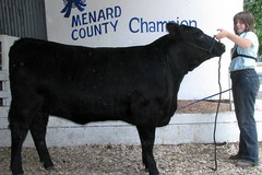 "Champion Angus 4H Menard Co Fair '10 • <a style=""font-size:0.8em;"" href=""http://www.flickr.com/photos/25423792@N05/14250983157/"" target=""_blank"">View on Flickr</a>"