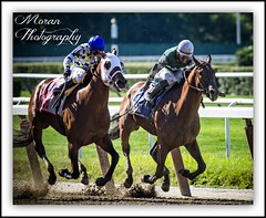 Suburban Handicap (EASY GOER) Tags: horses horse ny sports racetrack race canon track competition running racing 7d athletes athlete sporting 56 thoroughbred equine thoroughbreds belmontpark 400mm