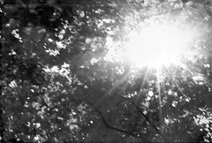 (Osyam-osyam) Tags: trees light summer bw sun white black film nature up look leaves june mono ray shine view branches grain beam laying