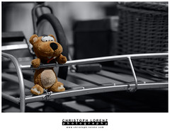 Teddy bear (Christoph Lorenz Photography) Tags: bear vw toy austria österreich nikon teddy beetle meeting fullframe fx plüsch spielzeug käfer d800 knuddelbär nikkor70200f28vrii