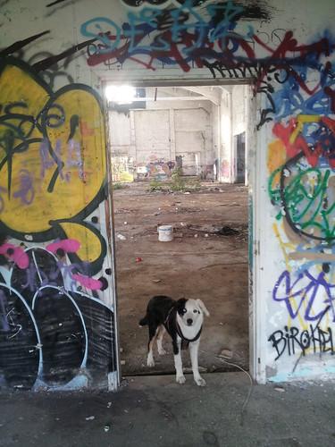 Judi, le chien de Xavier