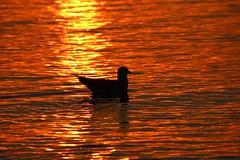 00654 Ostsee Sonnenuntergang (modekopp) Tags: eastsee ostsee fischland dars zingst darss
