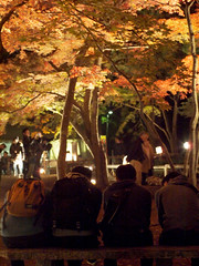 a quartet (matsugoro) Tags: olympus digital pen epl2 nagatoro chichibu saitama night autumn leaves red nature people quartet