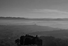 Lebanon cedar in Italy (Piedmont)- Langhe (Pietro31700) Tags: lebanon cedar cedrodellibano cedro libano piemonte piedmon langhe italy italia lamorra pietro31700 ngc