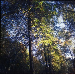 autumn (Lana Mayakovskaya) Tags: film analog lomo lofi lomography russia moscow dianamini squareformat fall autumn trees park