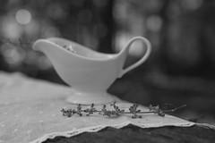 un cur miniscule (tiny heart) (l'imagerie potique) Tags: limageriepotique poeticimagery sweet bokeh hmbt heart russiansage handkerchief romantic inthewoods danslesbois