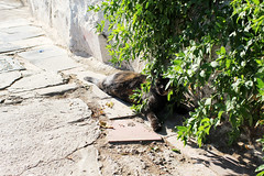 resting (Katrinitsa) Tags: athens greece plaka anafiotika architecture cityscape city acropolis neighbourhood street streets wall colors cityview view cat plants sunlight relaxing nature canon ef35mmf14lusm