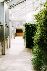 Conservatory Pathway (Mushi Kid) Tags: conservatory garden greenhouse plants sunlight path fuji film analog annarbor michigan universityofmichigan 50mm