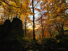 Autumn light at Schwarzer Brand 2016-2 (Bernhard_Thum) Tags: bernhardthum thum nature franken hasselblad hcd4824 schwarzerbrand hirschbachtal autumn sunset tistheseason