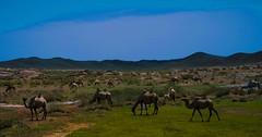 upload (LiChen.7) Tags: leica colours blu green nature landscape art animal life