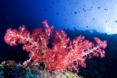 (Marco Carnovale) Tags: softcoral afsnikkor1735mmf28difed