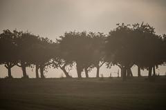 sonst nichts (schulze31) Tags: herbst autumn bume nebel fog foggy foggyday
