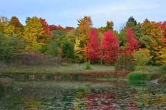 The Colorful Pond (AZ Imaging) Tags: pond leaves red foliage azimaging travel peace zen wonder canada ontario