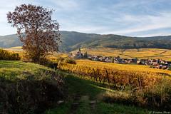 Hunawihr, Alsace, France (Etienne Ehret) Tags: hunawihr alsace france automne paysage landscape light lumière fujifilm fuji xt2 1855mm vignoble vigne wine french vin couleurs colors