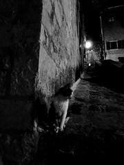 IMG_5344 (maru.hvozdecka) Tags: guca trumpet festival balkan music serbia montenegro krka dubrovnik kotor oldtown unesco gipsy tara bridge fortress church summer waterfalls