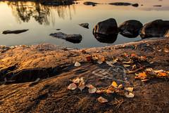Autumn (Ari Kalliala) Tags: tampere nsijrvi suomi finland nikon d7100 syksy autumn sigma1750mmf28