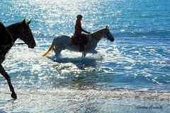 Water and light (Cristian Mauriello) Tags: italia italy roma rome ostia sea mare luce light sun sole blue horse beach spiaggia bagnasciuga shore walk passeggiata onde waves
