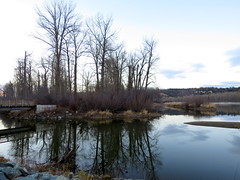 On a  walk in the park (diffuse) Tags: 116 cottonwoodislandpark walk hike trees water nechakoriver cloudy dusk