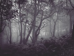 A Foggy November Day (Carol Crook) Tags: november fog mist fall autumn trees woods forest blackandwhite bandw monochrome uk england