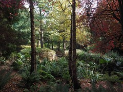 Autumn in Botanic Gardens (Feldore) Tags: forest trees autumn autumnal botanic gardens northern ireland belfast park ethereal red leaves fairytale path feldore mchugh em1 olympus 1240mm fall scenic