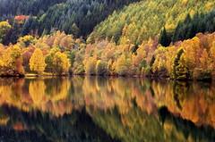 Loch Tummel Autumn Colours (eric robb niven) Tags: ericrobbniven scotland lochtummel perthshire loch autumn pitlochry