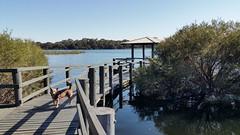 dog on the boardwalk (ClareSnow) Tags: dog kelpie boardwalk lake waterlevel lakegwelup lakegwelupreserve perth australia naturereserve spring