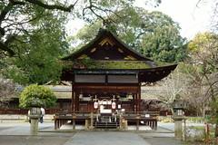 DSC02851 (MrSUIZOU) Tags: 京都 紅葉 北野天満宮 平野神社 十月桜