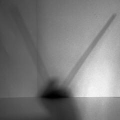#6 the Cerambycidae (Italian Film Photography) Tags: bw film analogue grain pellicola analogica 220 txp trix hc110 square blackandwhite biancoenero series concept abstract shadows games ombre astratto quadrato grana giochi forme shapes