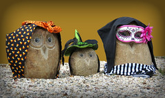 """Stone Owls in my garden with holiday clothes, these are a few of my Favorite  Things."" (Bennilover) Tags: owls stone gifts halloween witches masks diadelosmuertos mexico hyacinth julian gemma gardens yards owl favoritethings"