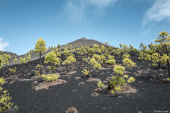 Volcan Pointu! (Arthur Janin.) Tags: arthur janin leica digital la palma canarias canaries island ile isla bonita paysage ladnscape sanieux sapin tree nature forest volcan volcano volcanic cactus stars milky way voie lacte long exposure