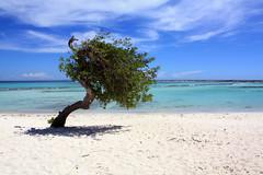 Simply Aruba