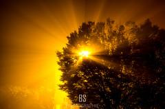 Magia Lucem (BS_Photographie) Tags: brouillard city cityscape dark darkness divin fog france light lumire miracle mist night nuit pentax tree ville appaearance arbre brume divine dream dreamscape magical magique obscurit rve