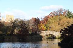 Gapstow bridge, Central Park 22/11/16 (andyk37) Tags: gapstowbridge centralpark newyork autumn sunshine 221116