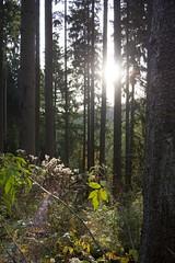 Taste of autumn (_dankhn) Tags: autumn sauerland hochsauerland bestwig fall herbst nature landscape light backlight
