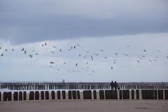 Am Strand (Raymond Loyal) Tags: domburg niederlande küste coast wind weather wetter vögel möwen wellenbrecher menschen sturm storm windig zeeland holland outdoor reportage detail