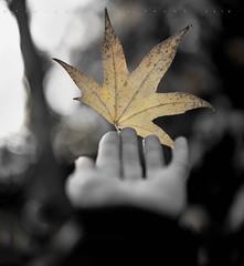 Gift of winter (Franci Van der vyver (Carmen Tulum)) Tags: hand gift winter fall