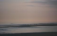 ... premonition ... Sand Beach Water Sky Twilight Birds Pink Sea      Playa (Almena14) Tags: sand beach water sky twilight birds pink sea      playa