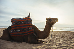 Camel on the beach - Tangier, Morocco (Naomi Rahim (thanks for 2 million hits)) Tags: tangier morocco africa northafrica 2016 travel travelphotography nikon nikond7200 wanderlust beach animals nature ride camel camels upclose closeup face cheeky expression clouds sky sand sitting  anja mediterranean straitofgibraltar