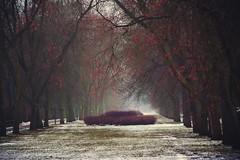 paths and roads (JoannaRB2009) Tags: path road alley avenue tree trees winter fall autumn mist fog misty foggy rain rainy park parknazdrowiu łódź lodz polska poland nature
